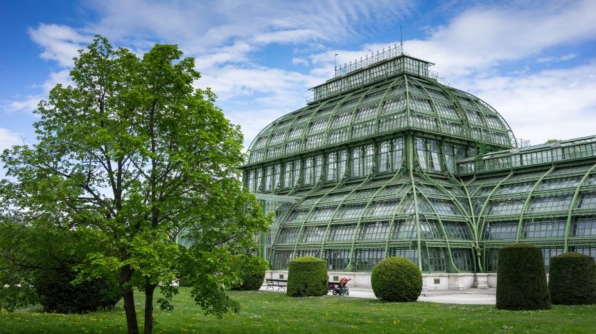 Palmery at Schonbrunn
